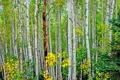 Картинка осень, листья, деревья, роща, осина