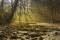 Картинка лес, свет, деревья, туман, река, ручей, камни