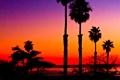 Картинка море, небо, закат, пальмы, силуэт, зарево