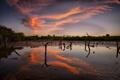 Картинка небо, облака, отражения, деревья, озеро, сухие