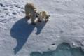 Картинка природа, медведи, север