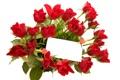 Картинка фото, Цветы, Красный, Букет, Розы