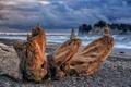 Картинка море, пейзаж, камни, дерево