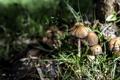 Картинка природа, грибы, трава