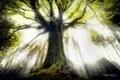 Картинка лучи, свет, природа, дерево