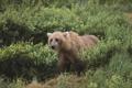 Картинка животное, обои, медведь, мишка, wallpaper, зверь