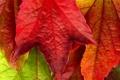 Картинка осень, макро, красный, жёлтый, фото, красивые обои, осенние обои