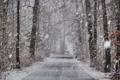 Картинка зима, снег, дорога