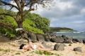 Картинка пляж, камни, Denise Milani