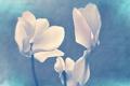 Картинка цветы, природа, стиль, фон