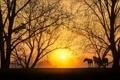 Картинка природа, кони, закат