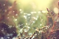 Картинка трава, капли, роса, растения, паутинка