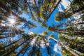 Картинка лес, небо, деревья, стволы, вершины