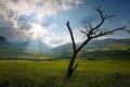Картинка пейзаж, поле, утро, дерево