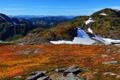 Картинка лед, снег, горы, камни, холмы, вид, растения