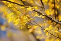 Картинка листья, осень, ветки