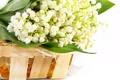 Картинка цветы, корзинка, ландыши, flowers, basket, lilies