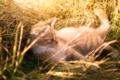 Картинка рыжий, трава, котенок