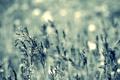 Картинка трава, свет, природа, фон, обои, поляна, цвет