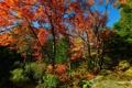 Картинка осень, лес, небо, деревья, камень