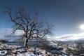 Картинка зима, пейзаж, небо, дерево