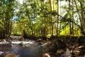 Картинка зелень, лес, деревья, река, камни, поток