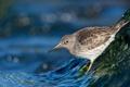 Картинка вода, ручей, птица, перья, клюв, хвост