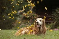 Картинка листья, друг, собака