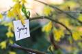 Картинка природа, дерево, записка, spring