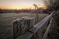 Картинка природа, забор, утро