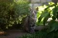 Картинка кот, природа, серый, сидит