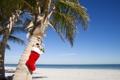 Картинка landscape, носок, побережье, Пальмы, игрушки, подарки, море