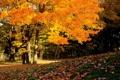 Картинка листья, деревья, Осень
