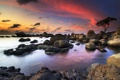 Картинка камни, дерево, скалы, рассвет, побережье