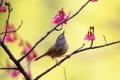 Картинка цветы, фон, дерево, птица, ветка, розовые
