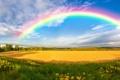 Картинка зелень, деревья, цветы, ветер, холмы, радуга, панорама