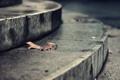 Картинка асфальт, город, лист, ступеньки, крыльцо