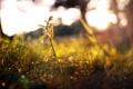 Картинка осень, росток, Трава