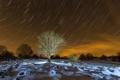 Картинка ночь, дерево, звёзды