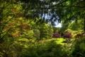 Картинка зелень, деревья, ветки, сад, Канада, кусты, лужайка