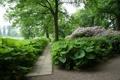 Картинка трава, листья, деревья, парк, Дания, дорожка, кусты