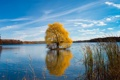 Картинка пейзаж, озеро, дерево, Kensington Metropark