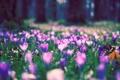 Картинка лето, трава, деревья, цветы, природа, поляна, фокус