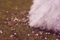 Картинка лепестки, платье, трава, розовые, цветы