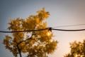 Картинка дерево, лампочка, провод