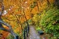 Картинка деревья, скамейка, парк, листва, Осень, тропинка