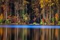 Картинка лес, природа, озеро, отрожение