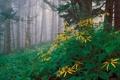 Картинка деревья, пейзаж, цветы, природа, туман