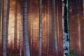 Картинка лес, свет, деревья, ветки, природа, стволы