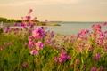 Картинка небо, трава, озеро, цветы
